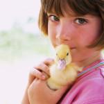 7 pasos para elegir la mascota ideal para el hogar