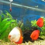 7 pasos para cuidar tu pecera o acuario
