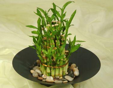 Ubicar las plantas en la casa seg n el feng shui 0800flor - Donde colocar fuentes de agua segun feng shui ...