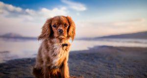 Estas apps te ayudarán a conocer aún mejor a tu mascota
