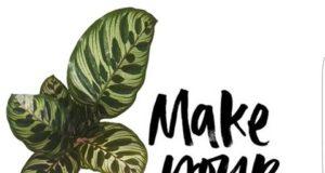 SinPote, plantas únicas en materos naturales