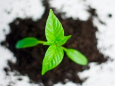 Conoce las 5 especias que puedes sembrar en casa.