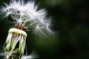 ¿Sufres de alergias? Estos son los tips indispensables para ti