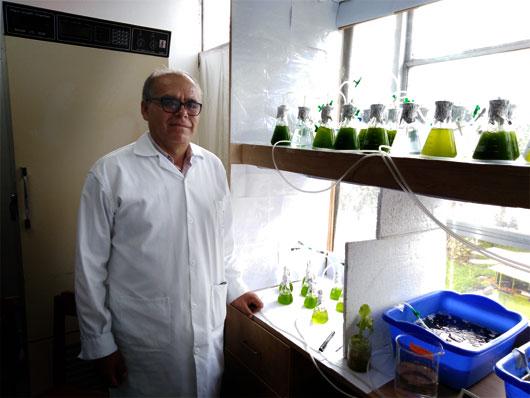 Cortesía de: http://biologia.unmsm.edu.pe/noticias/fitorreparacion.html
