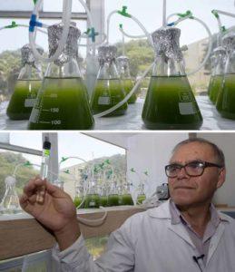 Cortesía de: https://www.jornada.com.mx/ultimas/2019/03/14/expertos-de-peru-utilizaran-microalgas-para-reducir-la-contaminacion-de-lagos-8550.html